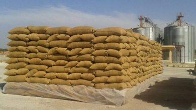 Photo of درعا: تجارة المخدرات أسهل من تجارة القمح!